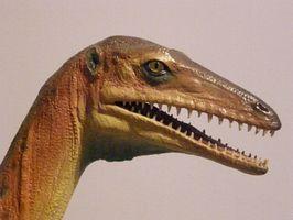 Musées de dinosaures dans le Montana