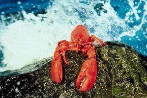 Comment faire cuire le homard dans une friteuse - Comment cuire les chataignes a l eau ...