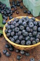 Puis-je utiliser de la farine au lieu de fécule de maïs pour faire Blueberry Pie dépôt?