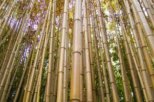 Comment prendre soin de bambou Fly Rods