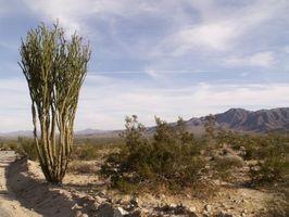 Relief et caractéristiques du désert au Texas