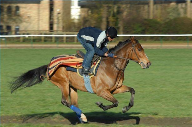 Comment devenir un propri taire de chevaux de course - Comment devenir proprietaire ...
