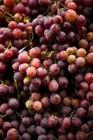 Quels types de raisins sont utilisés pour du vin à?