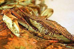 Comment faire cuire les crabes