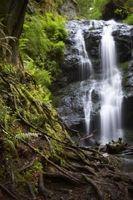 Quels sont les quatre propriétés de l'eau qui le rendent important pour les êtres vivants?