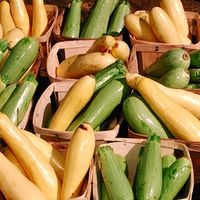 Types de courgettes Seeds
