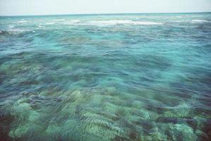 Caractéristiques mer de Corail