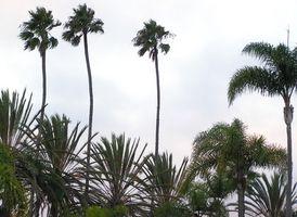 Hôtels sur Dale Mabry Tampa, en Floride