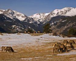 Els camps de caça de degoteig a Colorado
