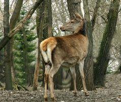 Comment peindre Patterns Camo sur un stand de Deer