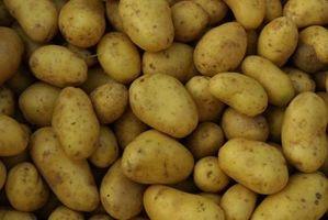 Comment conserver les pommes de terre cafards