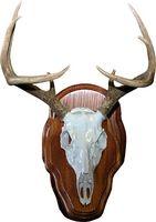 Comment peau un Deer Head pour un mont européenne