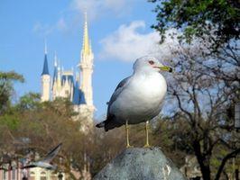 Activités non Disney à Orlando, en Floride