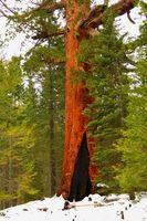 Hébergement dans Sequoia & Kings Canyon, Californie