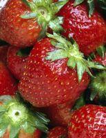 Comment faire maison à la fraise