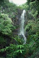 Maui Activités Février