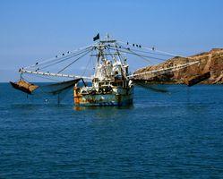 La pêche au thon au Mexique