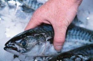 Comment préparer le poisson congelé