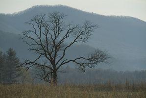 Cabines de la région Roan Mountain dans l'État du Tennessee