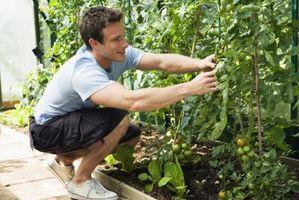 Comment planter un jardin Salsa