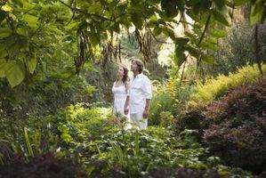 Différence entre la forêt tempérée et tropicale